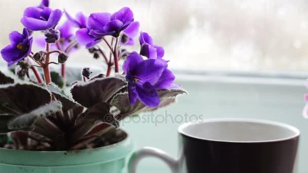 šálek kávy čaj horký nápoj na okenním parapetu vedle krásné domácí květina v květináči