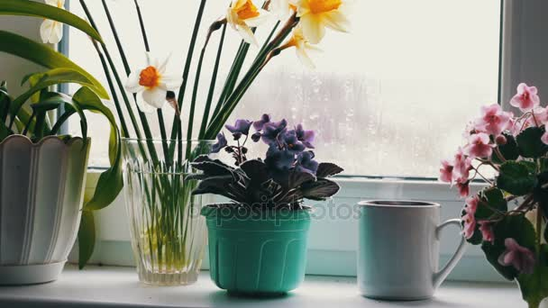Cup with a hot drink with a steam that stands on a windowsill surrounded by flowering flowers