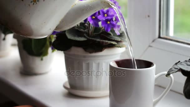An old, vintage teapot pours boiling water in a cup on the windowsill, against backdrop of beautiful, flowering violets