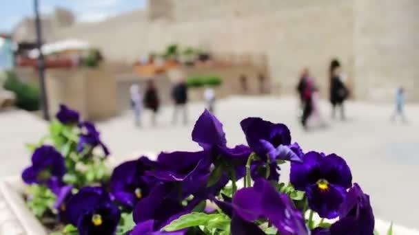 фото и название комнатных цветов с темными листьями