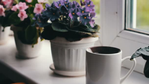 A cup with hot tea from which leaves the steam where they stand on the windowsill, against backdrop of beautiful, flowering violets