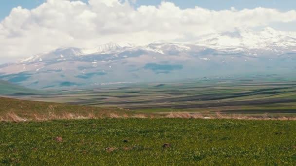 Zelená jarní čerstvé šťavnaté trávy na pozadí zasněžených vrcholků pohoří Kavkaz v Arménii