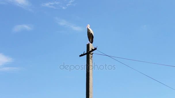 Čáp bílý sedí v hnízdě na stožár v letním dni
