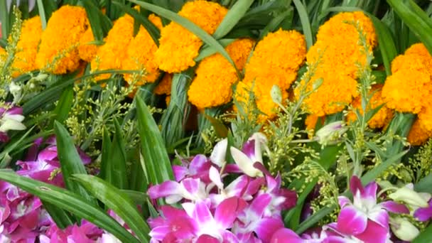 Beautiful purple and yellow Thai flowers. Exotic flowers of Asia for offering Buddha