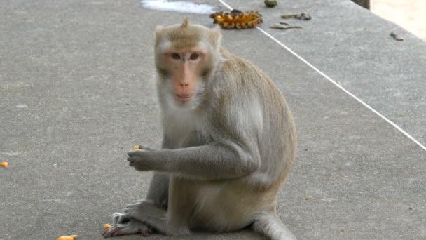 Opice se nachází přímo na ulici a jí