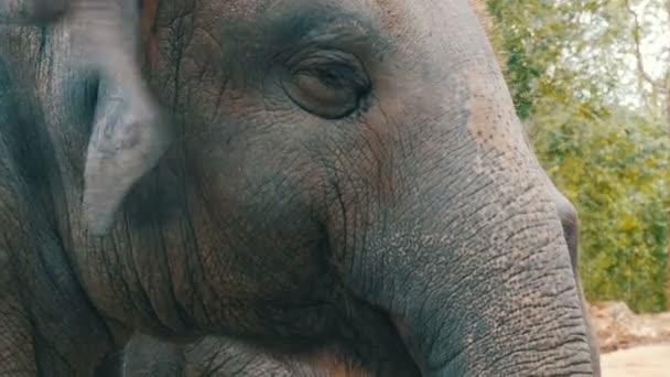 Mladý slon žerou trávu
