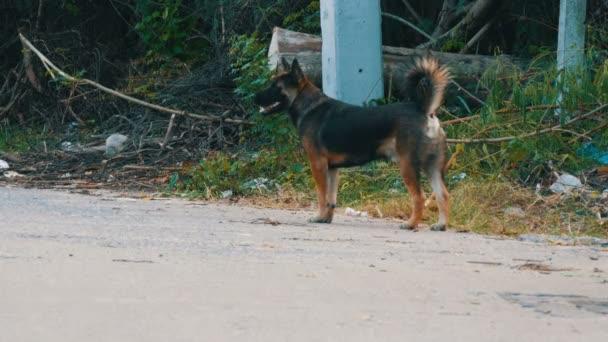 Homeless dog on a dirty, abandoned metropolis