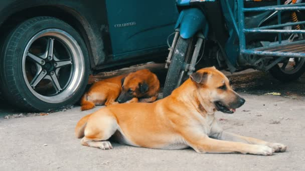 Two lonely dogs lie on street near a car in Thailand