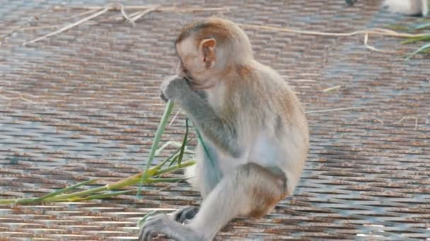 Monkey sits right on the street and eats