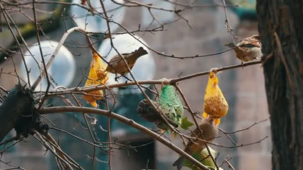 Sparrows on branch eats special food for birds from the feeder. Winter survival of birds