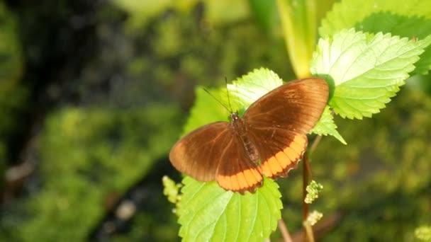 Krásný tropický motýl sedí na zeleném listu na větvi stromu na zeleném pozadí