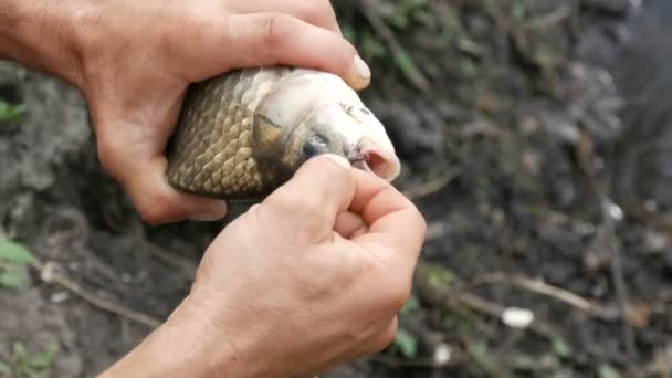 A halász erős férfi keze a kezében egy frissen fogott, élő halat tart a természetben egy tó hátterében, és kihúz a szájából egy horgászhorgot.