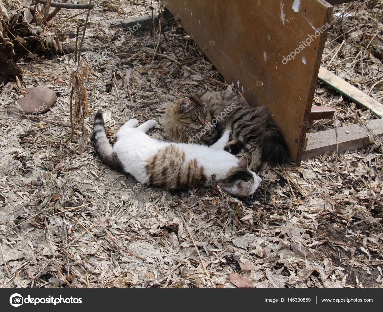2582bdac3 Gatos mascotas juegos de primavera. Mascotas favoritas en nuestros hogares  — Foto de ...