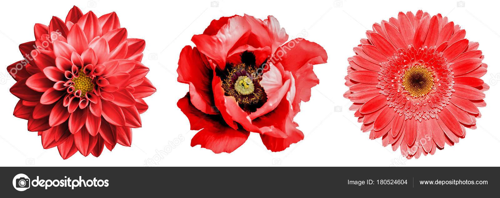 Auguri Per Anniversario Matrimonio : Favoloso frasi di auguri per matrimonio simpatiche raccolta di frasi