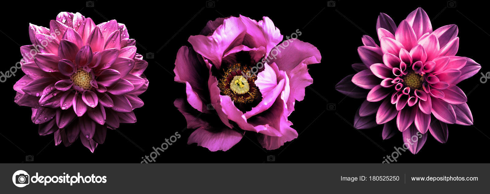3 Surreal Exotic High Quality Pink Flowers Macro Isolated On Black