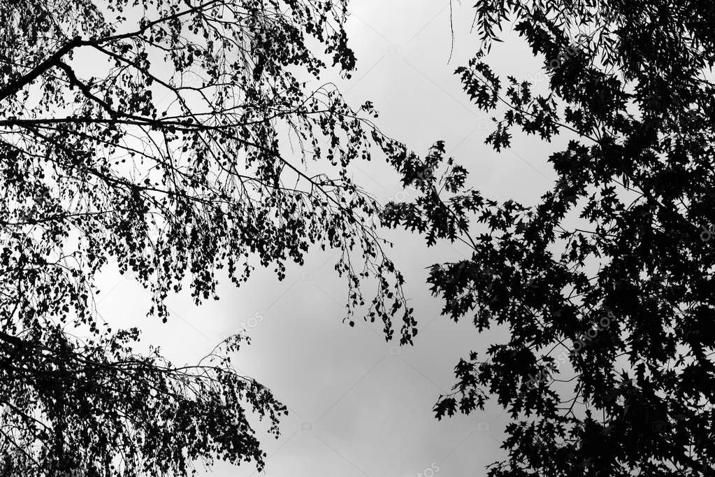 bottom view of silhouette black tree branches.