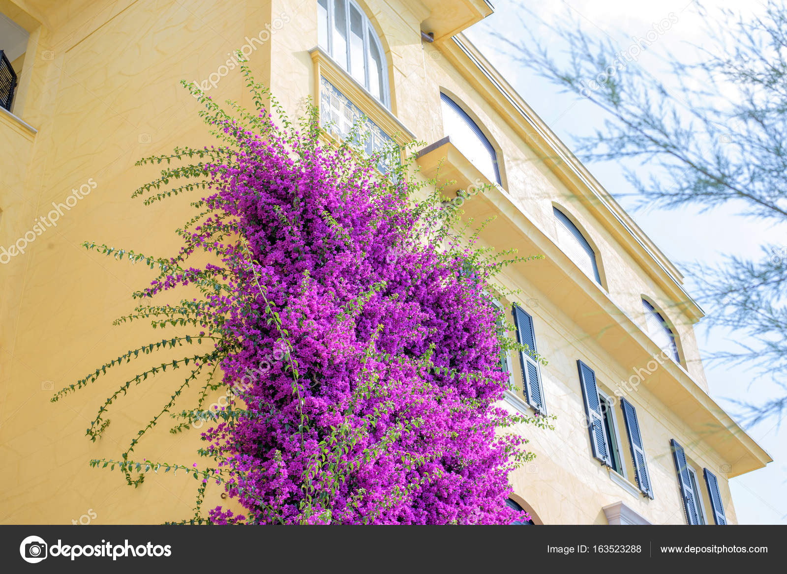 Beautiful Bright Purple Flowers On A Yellow Building Stock Photo