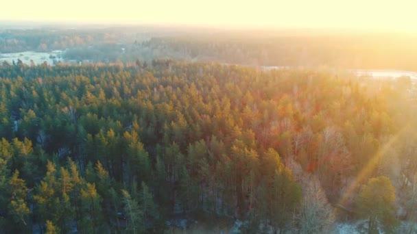 Jarní Les v slunečním světle shora. Panoramatický letecký pohled lesa s objektivu flare.