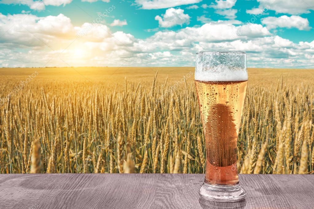 Glass of cold beer at sunset on the background of wheat field and blue sky. Summer landscape. Recreation and relax. Fresh brewed ale.