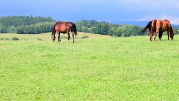 Pohled na farmě koně na pastvině. Plány pro koňské pastviny plevel