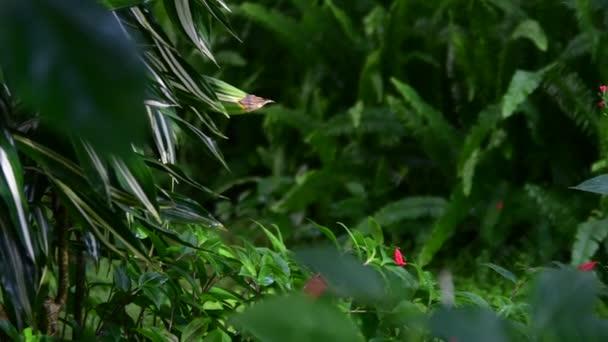 Closeup of tropical flowers. Beautiful tropical background. Red and green background. Tropical background. 4K