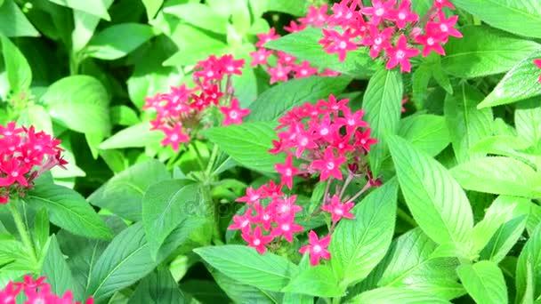 Closeup tropických květin. Krásné tropické zázemí. Červené a zelené pozadí. Tropických pozadí. Drobné červené květy. 4k