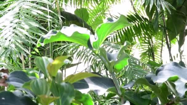 Plantes tropicales et arbres dans le jardin botanique. Serre ...