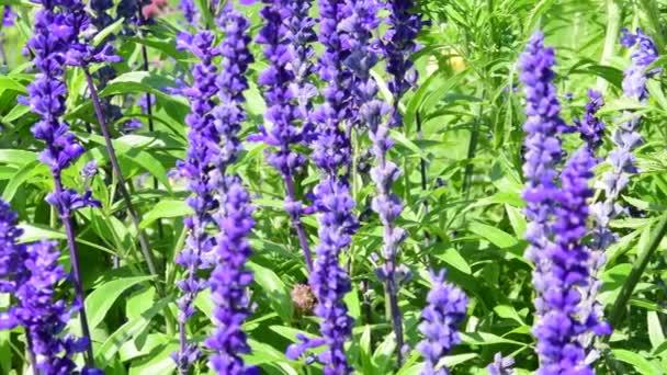 Violet blue-violet flowers. Green and violet background.
