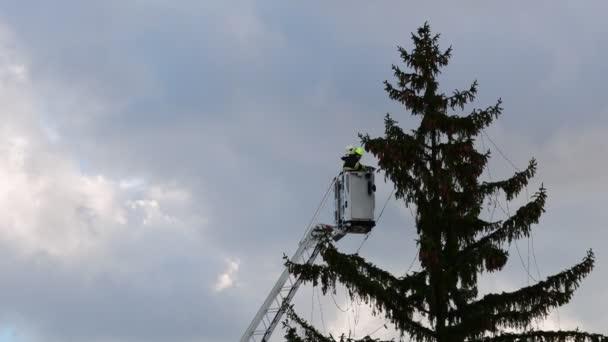 Obrázek ukazuje, že hasiči připojit světýlka na velké venkovní vánoční stromek.