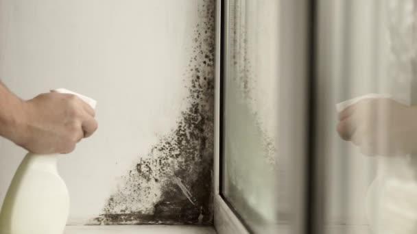 Zwarte schimmel in de hoek van venster voorbereiding voor het ...