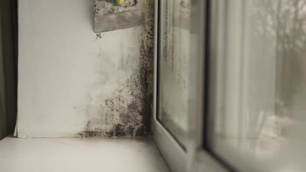 Noir De Moisissures Dans Le Coin De La Fenêtre Préparation Pour