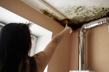 girl found mold in the corner of your kitchen , in your residential building after renovation