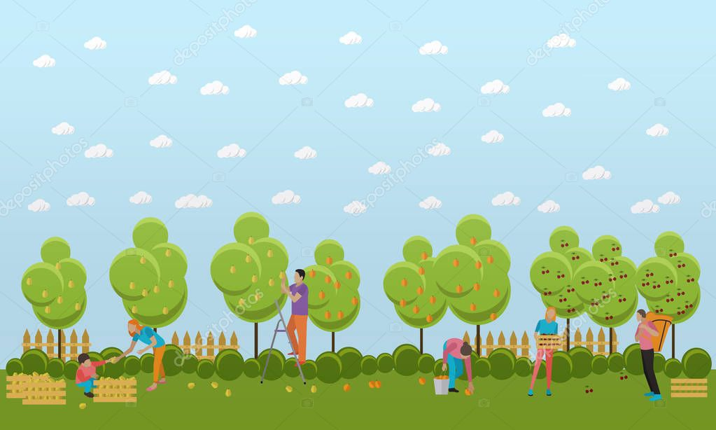 Vector banner of picking fruits, flat design