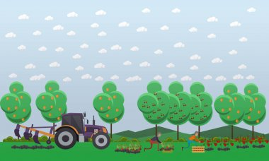Gardening concept vector illustration in flat style. Gardeners males picking tomatoes, strawberry and putting them into wooden box. Tractor tilling soil. stock vector