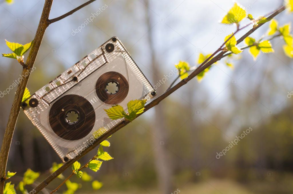 Audio cassette tape on the branch of a birch