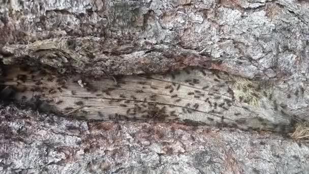 Ameisen kriechen über Holzstruktur