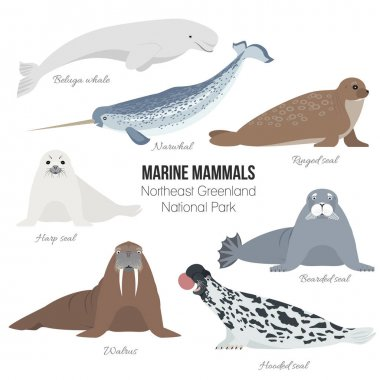 Marine mammal set. Walrus, narwhal, harp, bearded, ringed, hooded seal, beluga whale. Seal animal polar collection