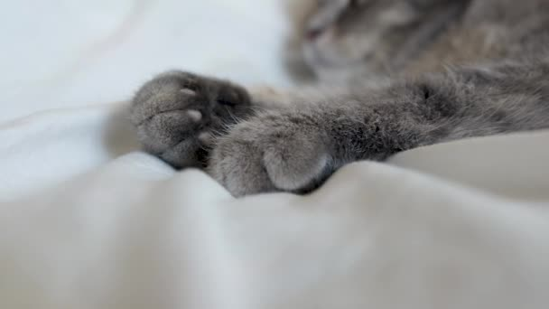 Grey cat paws on white bed.Fluffy kitten paws close-up. Cute cats feet stretching.