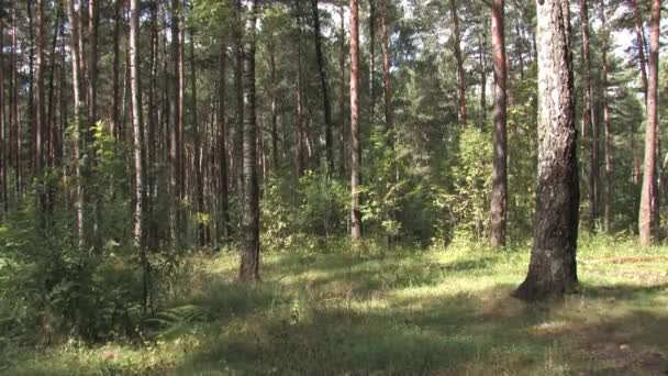 Lesní palouk, jehličnaté lesy, v létě zelené