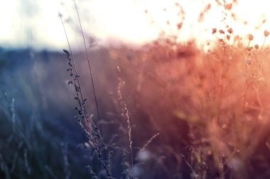 "Картина, постер, плакат, фотообои ""трава на закате с ретро-винтажным фильтром "", артикул 165158628"