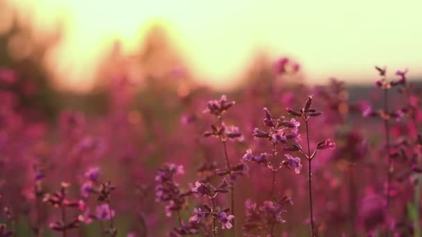 beautiful view of wild grass and flowers in the sunset. Beautiful flowers sway in the wind in the sun.