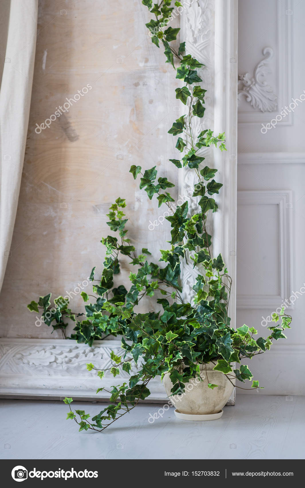 Herbe verte plante en pot vintage d coration contre un mur lumineux blanc c t de la porte - Plante contre l humidite dans la maison ...