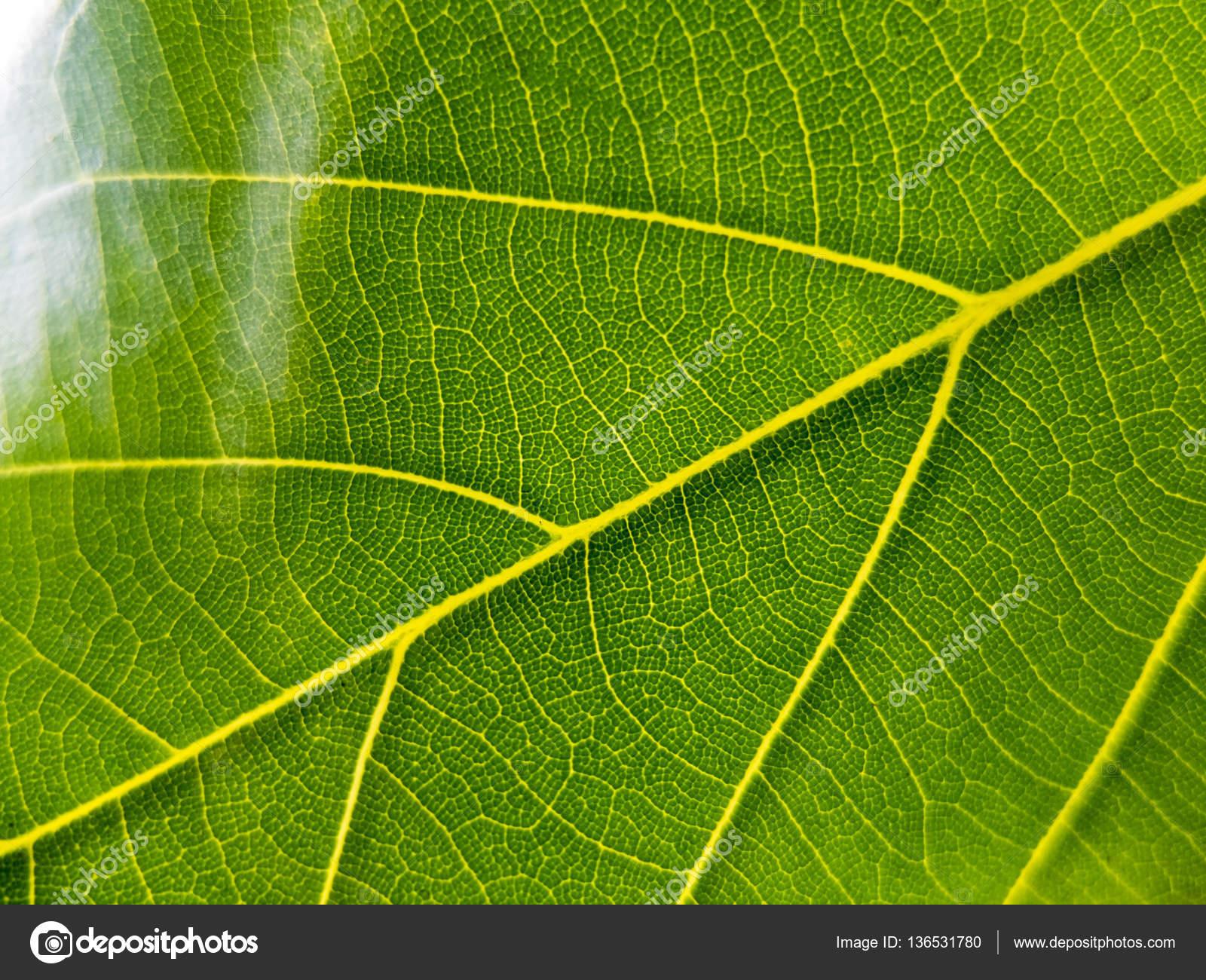 Sfondo Verde Natura Foto Stock Omyim1637 136531780