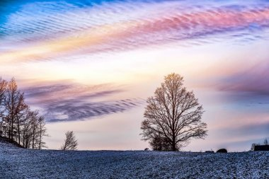 Winter landscape  .  A tree in the sky. snow in the field . Sunset and freezing air
