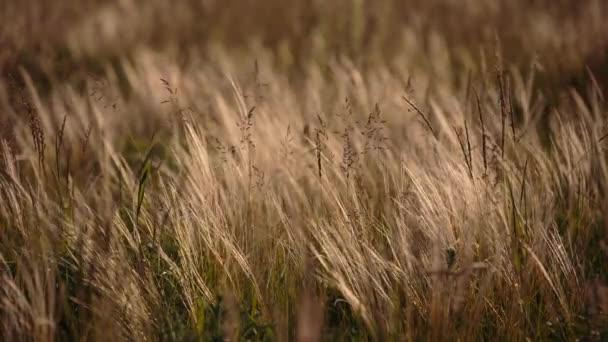 Kvetoucí byliny pole na konci jara v stepi Don ve večerních hodinách při západu slunce
