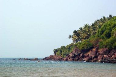 steep rocky beach with palm trees.