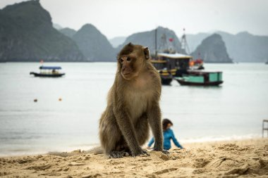 Monkey island beach at Lan Ha Bay, Ha long Bay tour in Cat Ba, Vietnam.