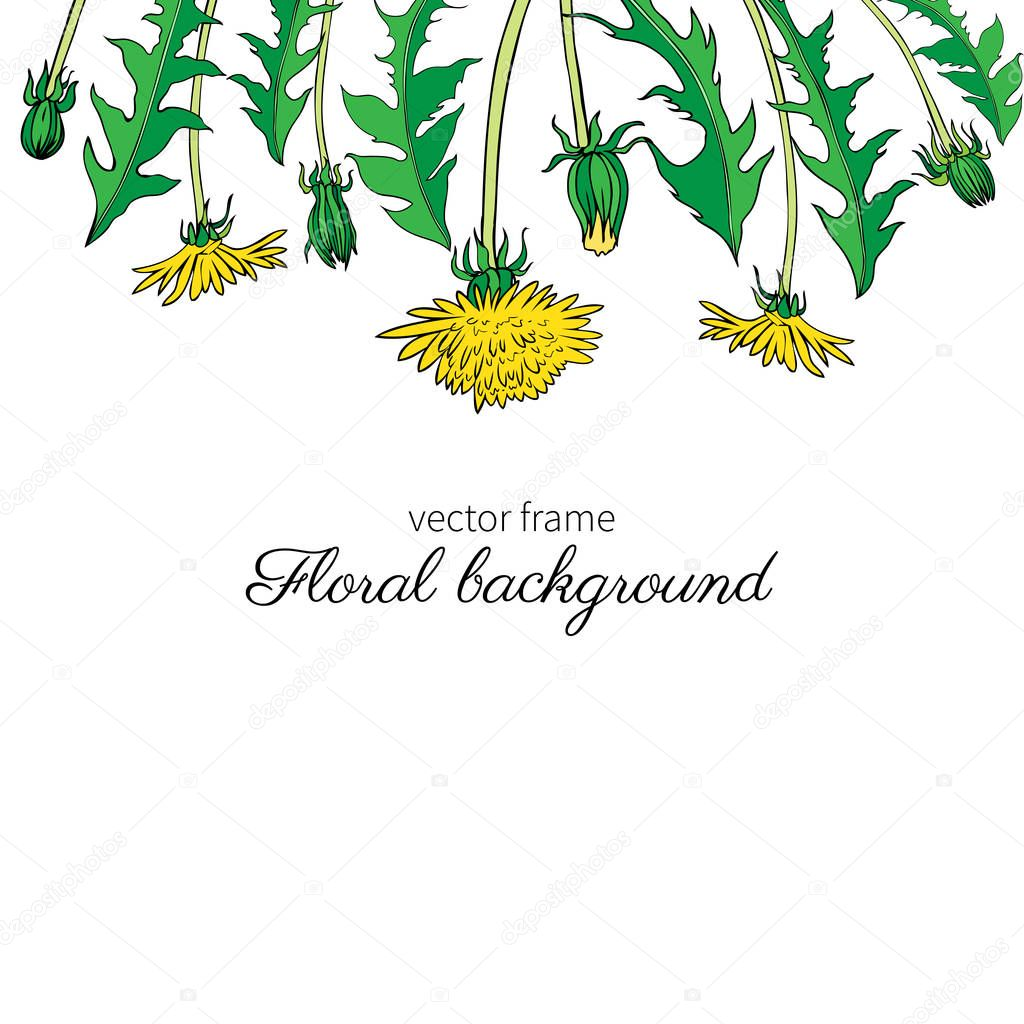 Dandelion flower, bud, leaves hand drawn vector ink colorful sketch isolated on white background, Decorative graphic floral frame for natural cosmetic, design package tea, florist shop, wedding invite