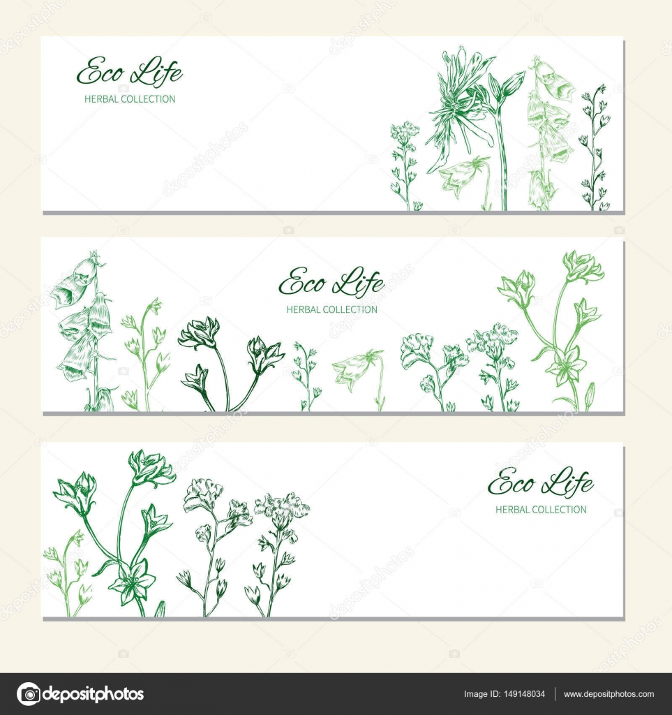 Horizontal Banners With Flowers And Herbs Hand Drawn Vector Illustration Isolated On White Herbal Sketch Design Label For Packaging Cosmetic Beauty Salon Natural Organic Product Greeting Card Stock Vector C M E L 149148034