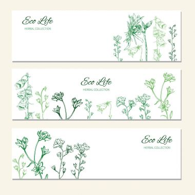 Horizontal banners with flowers and herbs, Hand drawn vector illustration isolated on white, herbal sketch, Design label for packaging cosmetic, beauty salon, natural organic product, greeting card